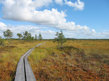 Hiking trail. On beautiful wet bog royalty free stock photo