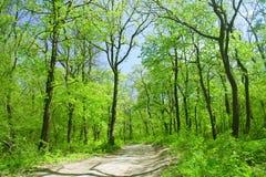Hiking Trail Royalty Free Stock Photo