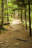Hiking Trail. The sun shines on a wooded hiking trail at Wolf's Neck State Park in Freeport, Maine Royalty Free Stock Image