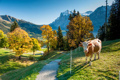 Hiking trail above Grindelwald Stock Image