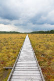 Hiking trail across a bog Royalty Free Stock Photos