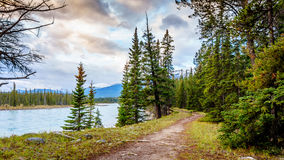 Hiking trail along the Athabasca River. Near the town of Jasper in Jasper National Park in the Canadian Rockies royalty free stock photography
