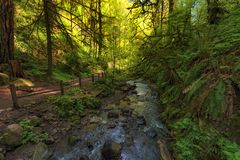 Hiking Trail along Balch Creek in Forest Park. Hiking in Forest Park Macleay Trail along Balch Creek in Portland, Oregon stock photography