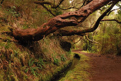 Hiking trail along levada on madeira Royalty Free Stock Image