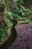 Hiking trail along levada on Portuguese island of Madeira. Hiking trail in the nature along levada canals on Portuguese island of Madeira stock photo