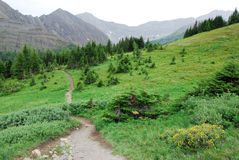 Hiking trail on alpine meadow. Summer view of winding hiking trail on alpine meadows at ptarmigan cirque, kananaskis country, alberta, canada Royalty Free Stock Images