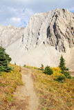 Hiking trail in alpine meadow Royalty Free Stock Photo