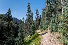 Hiking trail in an alpine setting goes through a spruce and fir forest under a perfect blue sky royalty free stock image