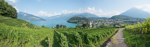 Hiking trail amidst beautiful vineyard, view to lake thun and sp Stock Images