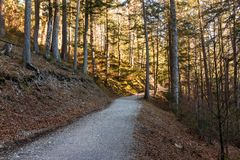 Rundweg, hiking trail around the Eibsee on the Zugspitze in Bavaria royalty free stock images