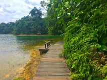 Hiking trail around Macritchie reservoir Singapore stock photo