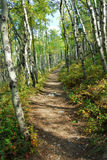 Hiking trail in aspen forest. Colorful autumn forest (mixed aspen and shrubs) in kananaskis country, alberta, canada Royalty Free Stock Photo