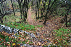 Hiking trail in the autumn deciduous forest Royalty Free Stock Photos