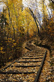 Hiking trail in autumn forest Stock Images