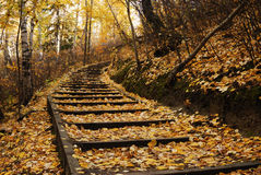 Hiking trail in autumn forest Royalty Free Stock Images
