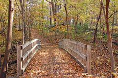 Hiking trail in autumn forest Stock Image