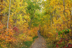 Hiking trail in autumn forest Royalty Free Stock Photos