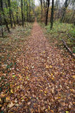 Hiking trail in the autumn forest Royalty Free Stock Photo