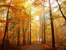 Hiking Trail in autumn Forest Stock Photography