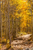 Hiking Trail in Autumn Stock Images