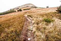 Hiking trail in autumn Mala Fatra mountains Stock Images