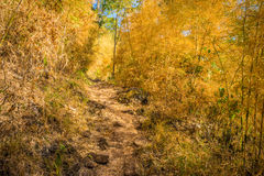 Hiking trail in bamboo forest on mountain Royalty Free Stock Photo