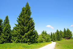 Hiking trail in Bavarian forest, Germany. Stock Photography