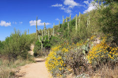 Hiking Trail in Bear Canyon in Tucson, AZ. Hiking trail in Bear Canyon in Sabino Recreation Area Park in the Sonoran Desert along the Santa Catalina Mountains in Royalty Free Stock Images
