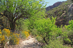 Hiking Trail in Bear Canyon in Tucson, AZ. Hiking Trail in Bear Canyon in Sabino Recreation Area Park in the Sonoran Desert along the Santa Catalina Mountains in Royalty Free Stock Image