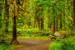 Hiking trail  and bench with trees scovered with moss in the rai Stock Photos