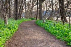 Hiking Trail Bluebells Riverbend Virginia Stock Photo