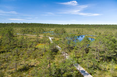 Hiking trail through bog area. Top view stock image