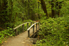 Hiking Trail Bridge. A small wooden bridge on a hiking trail in the woods royalty free stock photography