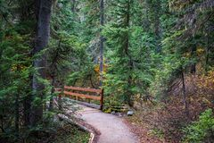 Hiking Trail Bridge in Mountain Pine Forest in Autumn. Landscape of hiking trail with bridge in mountain evergreen forest in Autumn. Rainy Lake Trail, Rainy Pass royalty free stock images