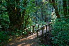 Hiking Trail Bridge Umpqua National Forest