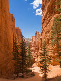 Hiking trail in Bryce Canyon National Park Royalty Free Stock Photography