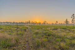 A Hiking Trail in Central Florida at Sunrise Stock Image