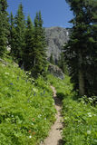 Hiking trail in Colorado Rocky Mountains Stock Photos