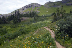 Hiking trail in Colorado Rocky Mountains Royalty Free Stock Images