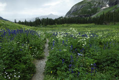 Hiking trail in Colorado Rocky Mountains Stock Image