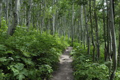 Hiking trail in Colorado Rocky Mountains Stock Images