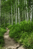 Hiking trail in Colorado Rocky Mountains Stock Photo