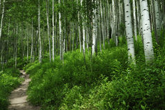 Hiking trail in Colorado Rocky Mountains royalty free stock photography