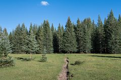 Hiking trail crossing a beautiful alpine meadow towards a forest of spruce and fir trees under a blue sky stock photo