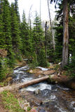 Hiking trail crossing mountain creek Royalty Free Stock Photography