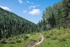 Hiking trail curving through an alpine meadow in a valley under a beautiful blue sky with puffy white clouds stock image