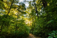 Hiking trail through a Deciduous forest. Deciduous Forest curved Hiking trail through thick green vegetation at sunset Stock Photo