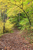 Autumn Path in the Woods Royalty Free Stock Image