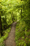 On the Hiking Trail Eifelsteig Royalty Free Stock Image