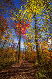 Hiking trail in fall forest Stock Photo